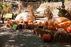 New York Botanical Garden Pumpkin Carving by Giant Pumpkins Archives Plant Talk