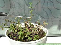 window herb harden how to start a window herb garden 13 steps with pictures