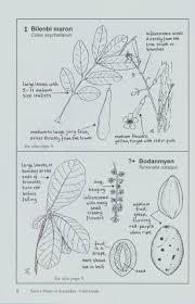 native plants of ireland native plants of seychelles a basic checklist and field guide