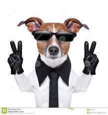 Cool Stock by Cool Dog Stock Photos Images U0026 Pictures 4 862 Images