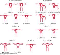 Hymen Female Anatomy Anatomic Disorders Williams Gynecology 3e Accessobgyn
