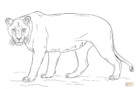lioness coloring page free printable coloring pages