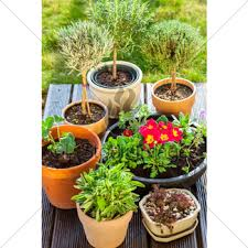 flower pots gl stock images