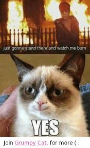 Grumpy Cat Yes Meme - just gonna stand there and watch me burn yes join grumpy cat for