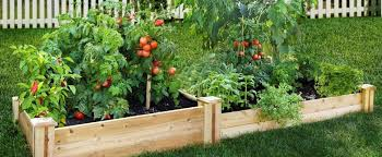 How To Design Your Backyard How To Design Your Backyard Vegetable Patch Modularwalls