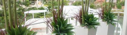 Faux Outdoor Bushes Indoor Outdoor Artificial Plants U0026 Tress Gold Coast Interior