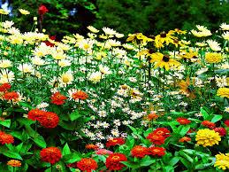 garden design garden design with beautiful flower garden photos
