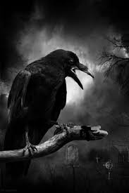 halloween background crow crow these fly everywhere in my town even riding on top of cars