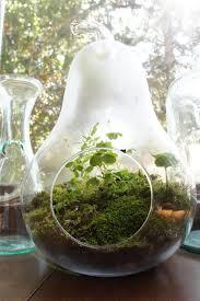 lilikoi vanilla mini backyard moss terrarium