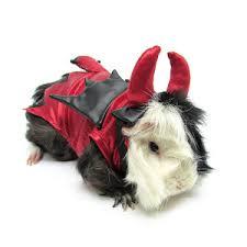 Cute Small Dog Halloween Costumes Living Pet Halloween Devil Small Pet Costume