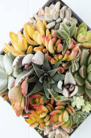 succulent arrangements why you should gift succulent arrangements for special occasions