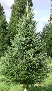 real christmas tree types cheminee website