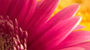 google images flower best flowers google plus covers google plus cover photos