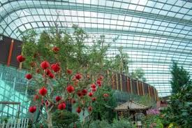 New Year Bay Decorations by Chinese New Year Decorations At The Flower Dome Gardens By The
