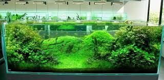 saltwater aquarium decor