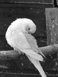 Free Images Wing Black And White Beak Toilet Blue Rest