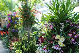 bronx botanical garden escape into a paradise of flowers