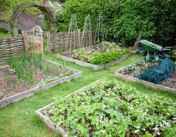 awesome design a vegetable garden layout exprimartdesign com