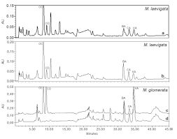 isolation and hplc quantitation of kaurane type diterpenes and