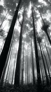 wallpaper tumblr forest black and white forest wallpaper mystic forest 5 wallpaper nature