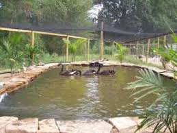 17 best ideas about duck duck pond designs small newman