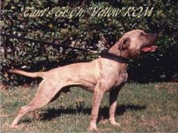 american pitbull terrier jeep bloodline old mountain man by lesnar hughes game dog history for the