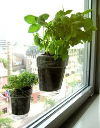 window herb gardens you ve got to see these window planters with suction cups for your