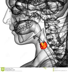 Human Anatomy Thyroid 3d Rendered Illustration Of The Thyroid Gland Stock Illustration