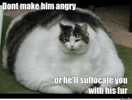 Angry Meme Cat - don t make him angry funny fat cat picture