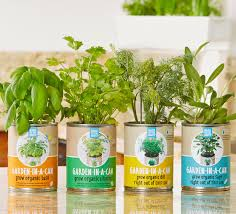 Kitchen Herb Garden Kit Cultivated Gift Curated Kits Empower Individuals To Start Their