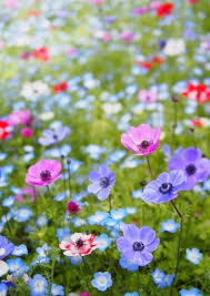 Pictures Of Gardens And Flowers Best 25 Meadow Flowers Ideas On Pinterest Flower Pictures