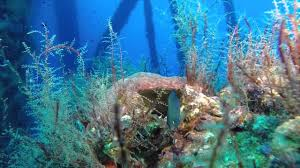 2015 diving oil rigs in the texas flower garden banks national