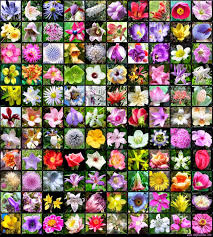 All Types Of Flowers List - 100 type of flowers names and pictures 20 best perennial