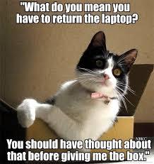 Cat Laptop Meme - cat in a laptop box fun cat pictures