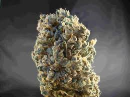 grow light wikipedia the free encyclopedia 400w metal halide bulb