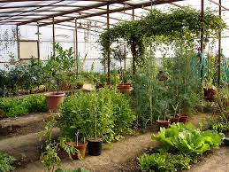 my organic vegetable garden in arizona drweil