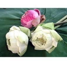 wedding flowers in bulk buy fresh cut bulk lotus flowers at wholesale pricing buy lotus