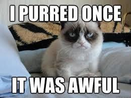 Success Cat Meme - digital success with meme marketing