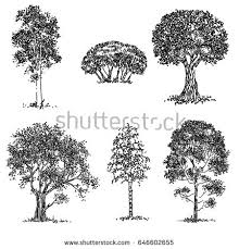 set hand drawn tree sketches black stock vector 450569392