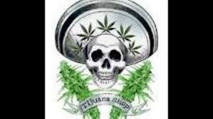 imagenes perronas mota marihuana cartel de santa youtube