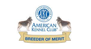 belgian sheepdog breeders new york timberwind tervuren