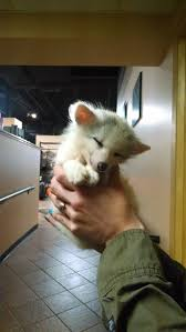 94 best foxes images on pinterest baby red fox fox pictures