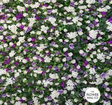 flower wall co flower wall hire sydney