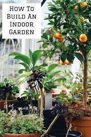 garden inside house 5 ways you can build a garden inside your house gardens indoor