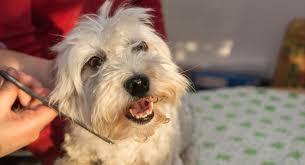 20 Great Dog Walks Around Sydney And Central Coast Australian Dog Minders Groomers Dog Care Sydney Melbourne And Brisbane