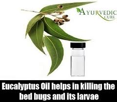Bean Leaves Bed Bugs Bed Bugs Herbal Remedies Natural Treatments And Cure Herbal