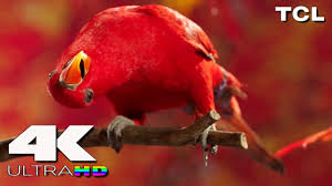 4k ultra hd tcl 4k resolution 15 minute video youtube