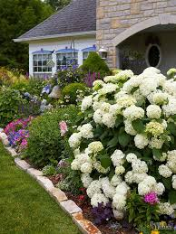 Our Favorite Plants How To by What Should I Plant Together Plants Gardens And Flower