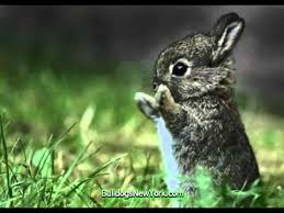 Ready For Spring by Baby Animals Ready For Spring Youtube