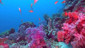underwater coral images reverse search
